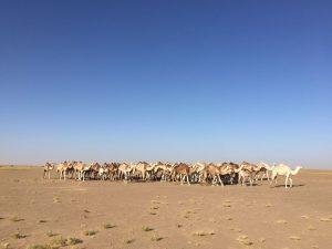 Mauritania: Driving across the Sahara Desert